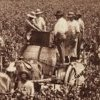 Harvest on Dalwood Vineyard near Branxton 1880. SLNSW