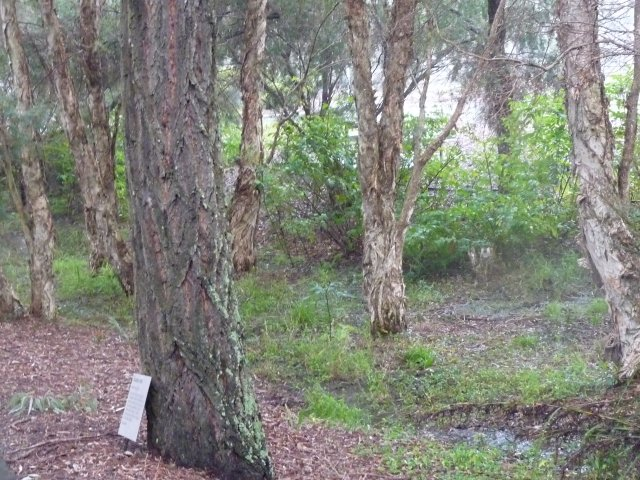 Endangered Woodland of Cumberland Plain, Western Sydney
