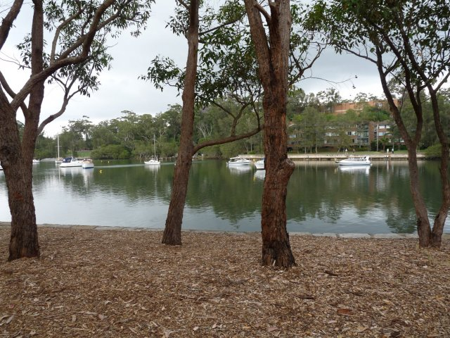 Burns Bay, Lane Cove River